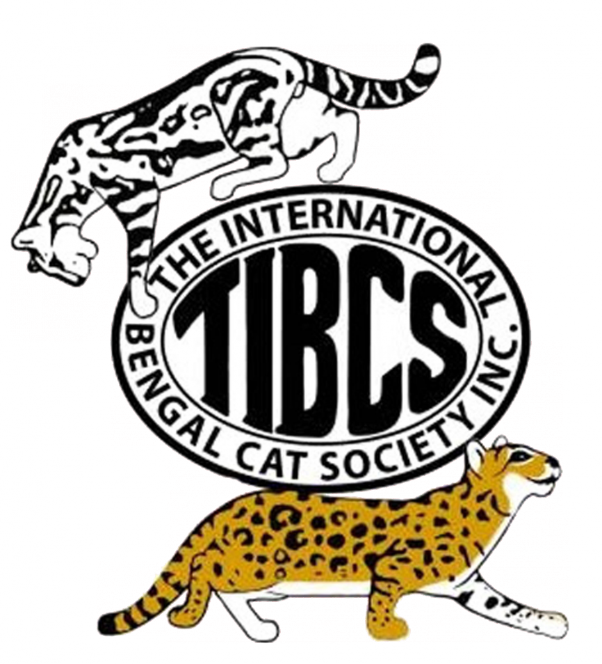 Bengal Cat Breeders In Oklahoma - Bengal Cat Club