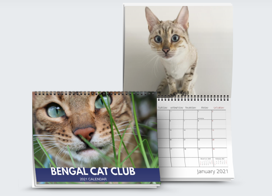 Bengal Cat Club Calendar